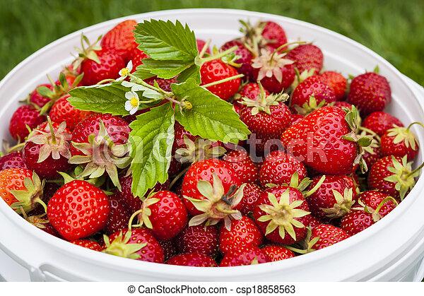 Čerstvě vybrané jahody - csp18858563