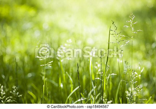 Červená tráva - csp18494567