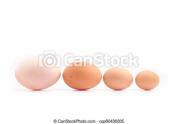 čtyři, linkovaný, kuře, neobvyklý, vejce, -, tlouška, up - csp90436005