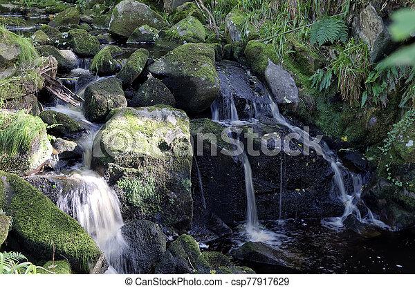 řeka krajinomalba, forrest, malý, vodopád - csp77917629