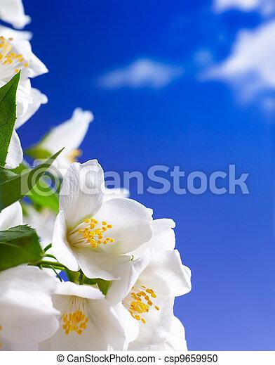 Art jasmínová květina - csp9659950