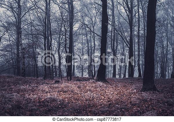 autumn kopyto, mlha, les, suchý, počasí - csp87773817