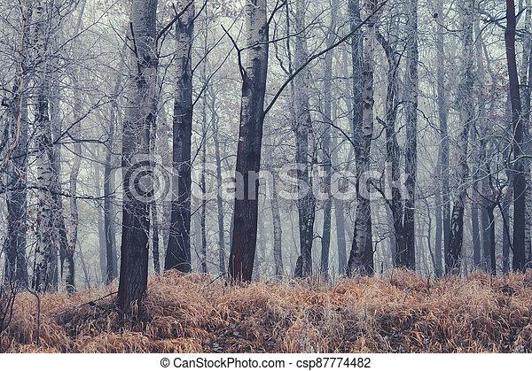 autumn kopyto, mlha, les, suchý, počasí - csp87774482