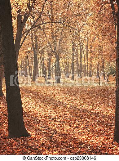 autumn les, sluneční paprsky - csp23008146