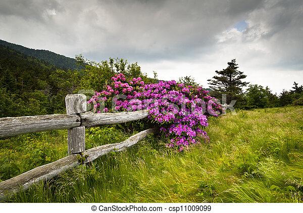 hora, růže alpská, květ, ohradit, druh, dřevěný, sad, díra, udat, grošovaný, venku, kráječ, pel - csp11009099
