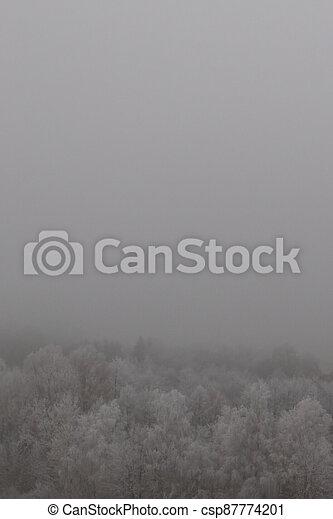 jíní, les, mlha, pokrytý, zamrzlý - csp87774201
