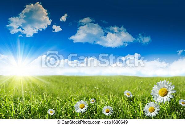konzervativní, zkusmý drn, nebe, sedmikráska - csp1630649