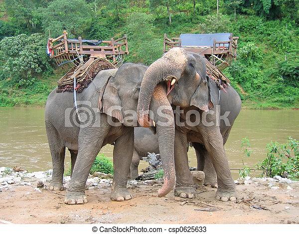 láska, slon, obrazný, řeka, thailande - csp0625633