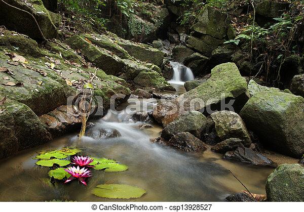 Malá voda lilie a vodopád v lese. - csp13928527
