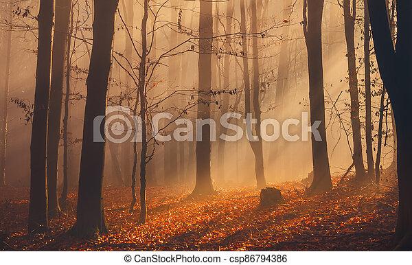 mlha, barvitý, podzim zapomenout, les, sluneční paprsky - csp86794386