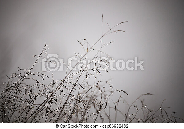 mlhavý, orosený, den, mlha, pastvina - csp86932482