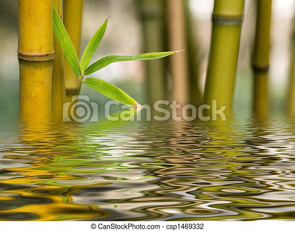 namočit, bambus, odraz - csp1469332