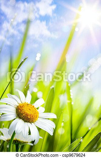 Naturální letní pozadí s květinami v trávě - csp9679624