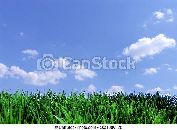 oplzlý podnebí, pastvina, nezkušený - csp1880328