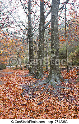 podzim zapomenout, les, barvitý - csp17542383