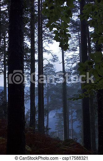 podzim zapomenout, les, barvitý - csp17588321