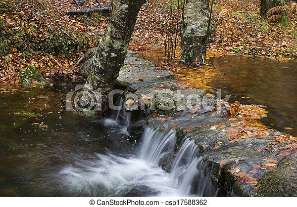 podzim zapomenout, les, barvitý - csp17588362