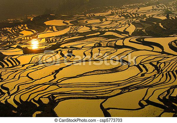 Rýžové terasy yuanyangu, Yunnan, porcelán - csp5773703