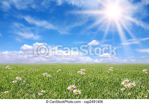 Serene sunny field meadow na jaře - csp2491406