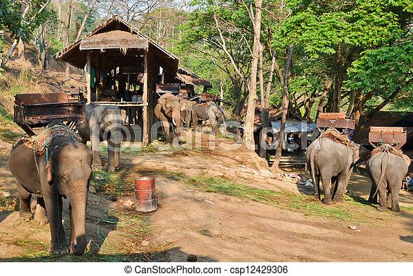 severní, tábor, asie, slon, thajsko, vilage - csp12429306
