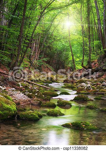 V lese je řeka - csp11338082