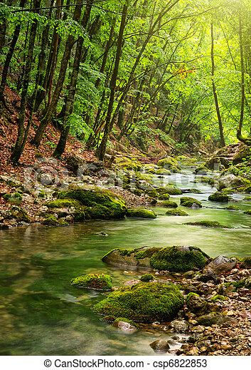 V lese je řeka - csp6822853